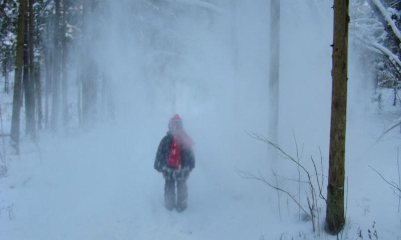 Трехлетний ребенок сам смог выйти из тайги в -35°С