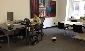 В Италии сотрудникам банка разрешили приводить собак на работу