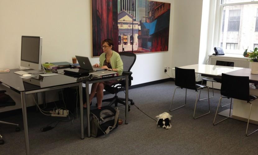 В Италии сотрудникам банка разрешили приводить собак на работу - Блокнот
