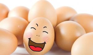 Яйцо - «знаменитость»