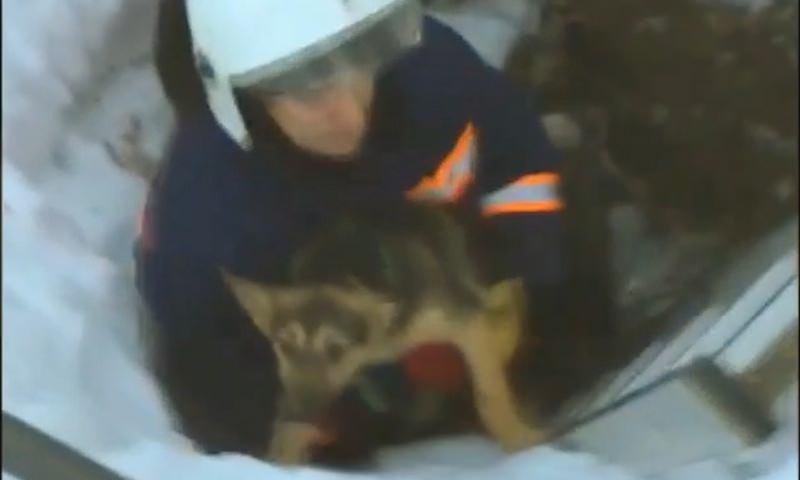 Новосибирские спасатели освободили упавшую в заброшенный погреб собаку