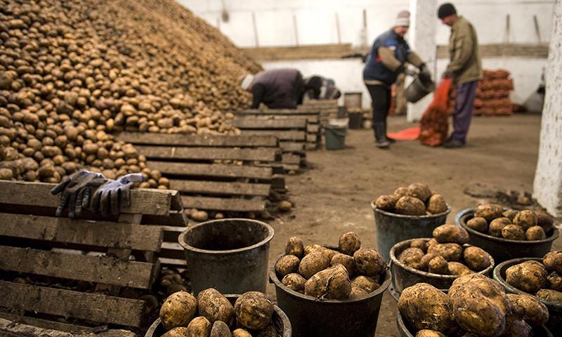 СК возбудил дело из-за  поставки гнилой картошки  для Росгвардии в Чечне
