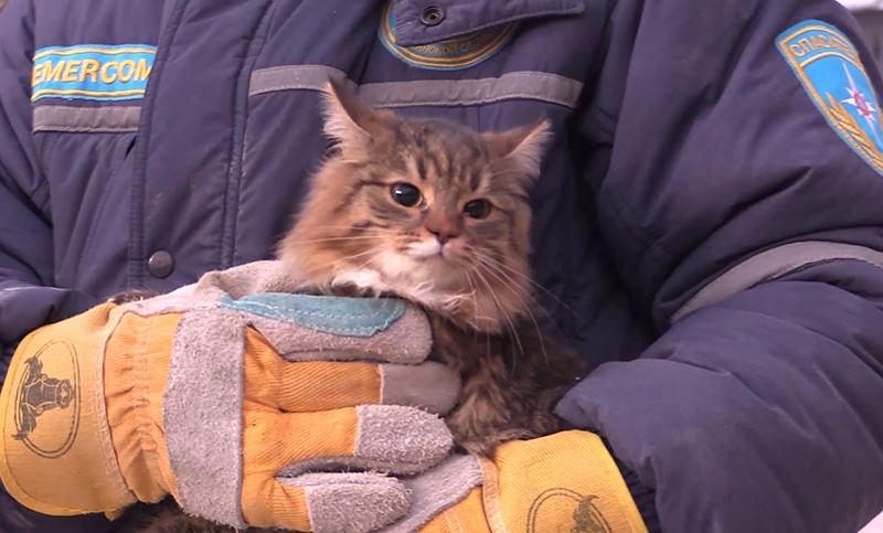 Спасатели достали собаку и  шесть кошек из обрушившегося  дома в Магнитогорске