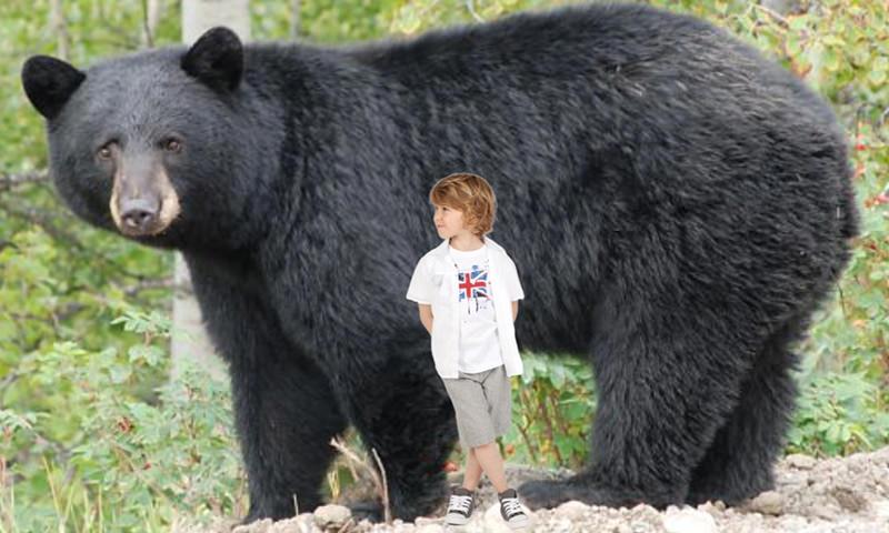Потерявшийся в лесу 3-летний ребенок рассказал о медведе-спасителе