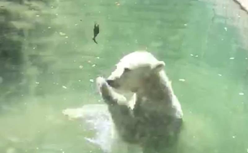 Медведь в зоопарке пытался реанимировать птичку из меню