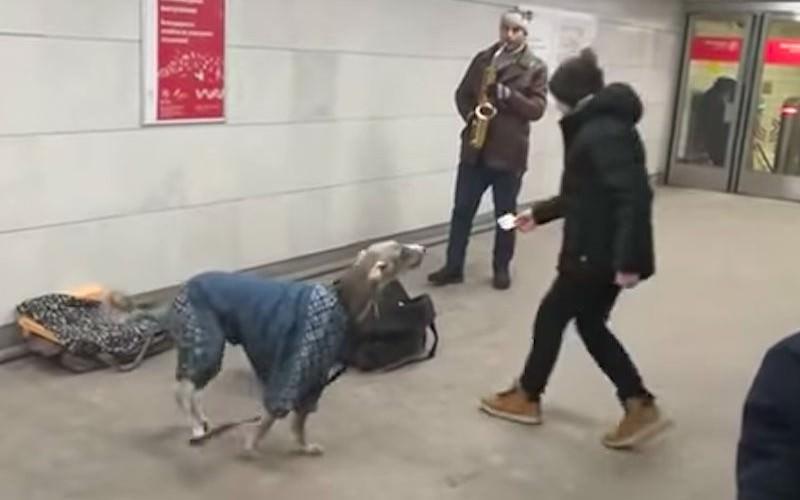 """""""Поющая"""" собака заработала кучу денег в московском метро"""