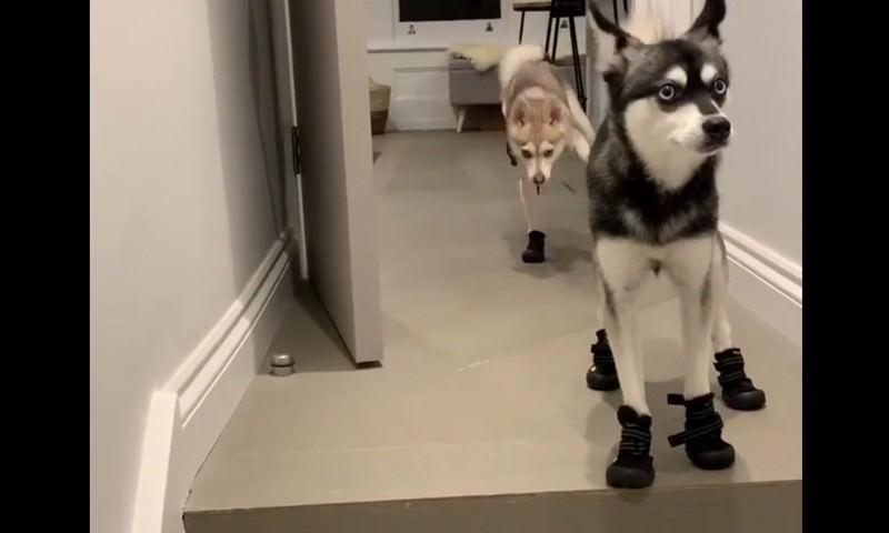 Надели ботинки - к прогулке готовы!