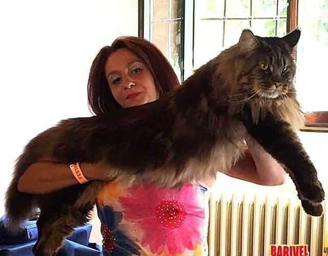 Самый длинный кот в мире - Блокнот