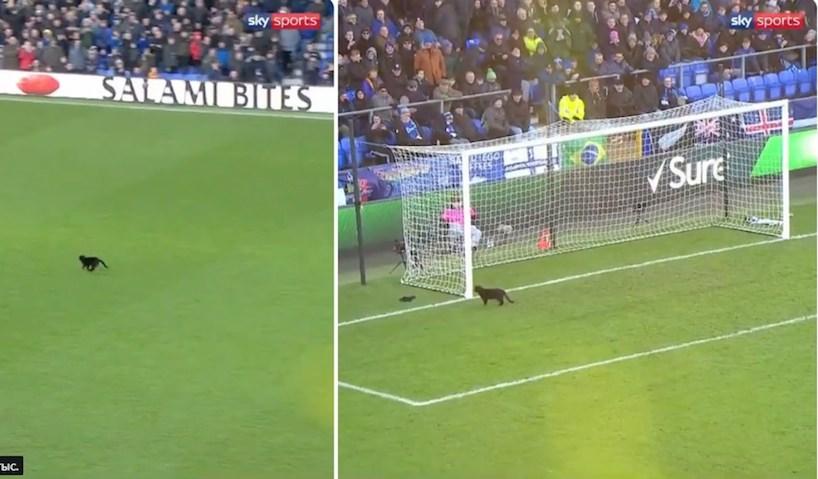 Черный кот выскочил на футбольное поле, сорвав матч и аплодисменты