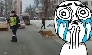 Сотрудник ГИБДД помог перейти улицу хромой собаке
