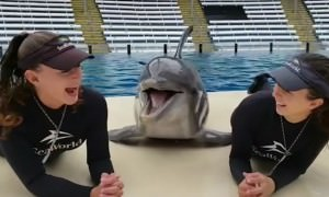 Дельфины тоже люди?