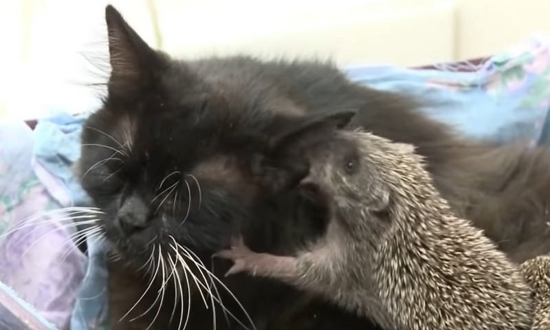 Ёжкин кот существует!