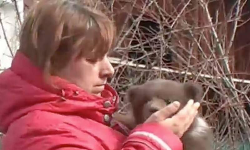 Женщина спасла медвежонка из ловушки и попала за решетку