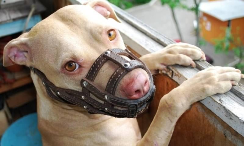 МВД обнародовало список запрещенных к выгулу без намордника собак
