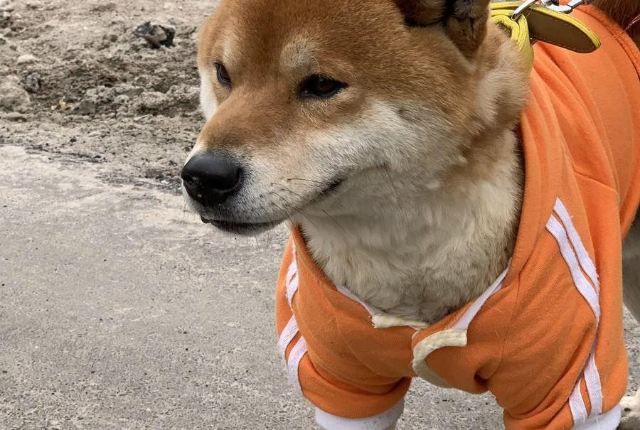 Продающий картошку пес стал звездой соцсетей