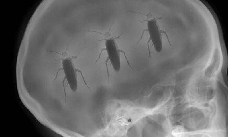 Вот откуда берутся тараканы в голове