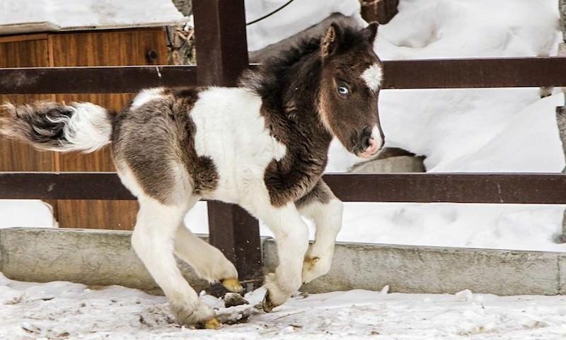 В зоопарке Екатеринбурга появился на свет жеребенок