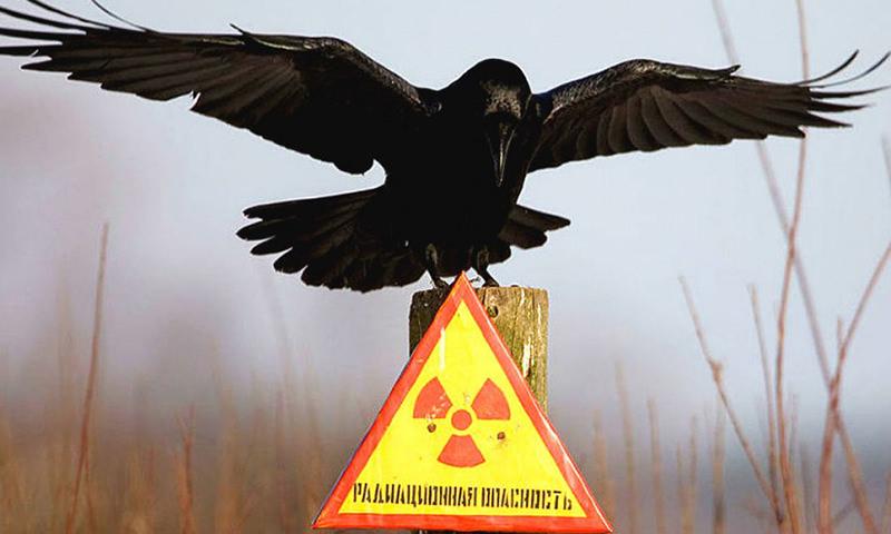 Календарь: 26 апреля - Годовщина чудовищной катастрофы в Чернобыле