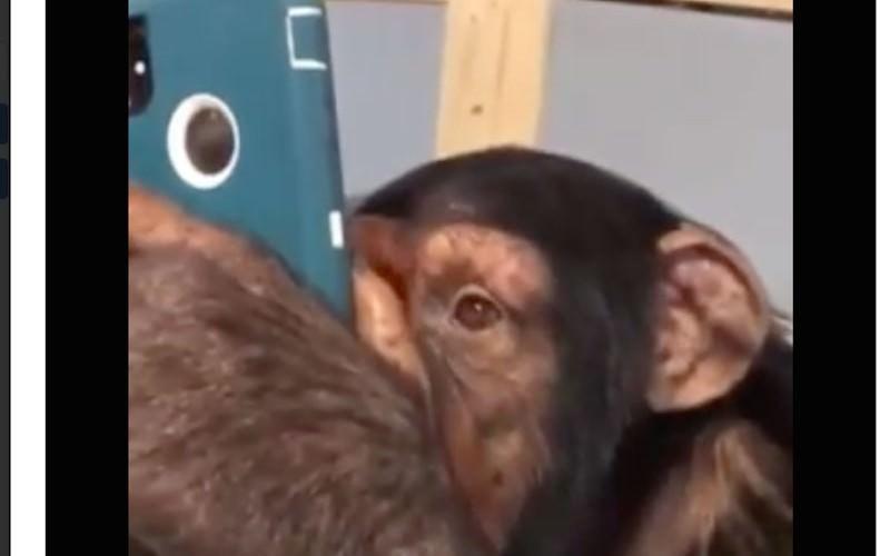 Даже обезьяна любит это дело
