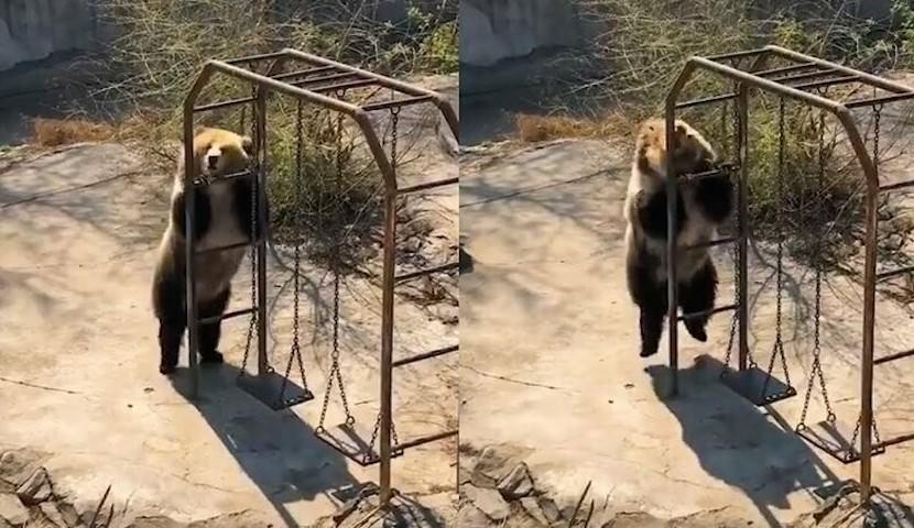Танцующая медведица Хорошенькая отожгла на площадке