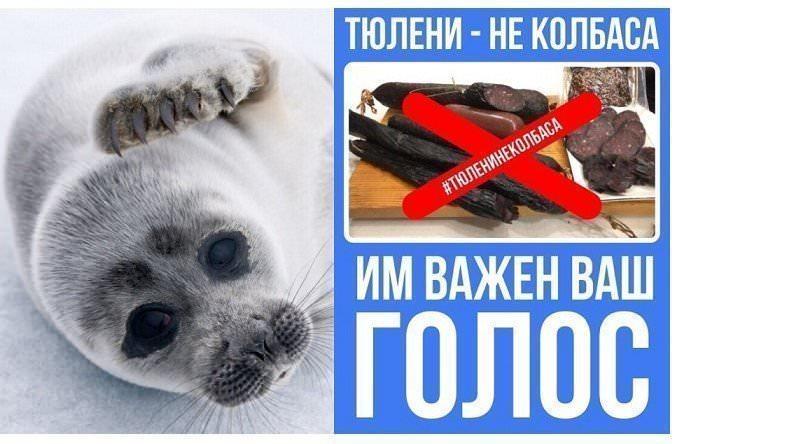 Тюлени – не колбаса: в Интернете собирают подписи против магаданских предпринимателей