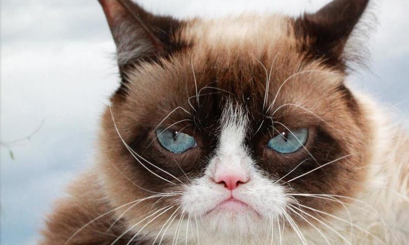 Умерла самая угрюмая кошка в мире