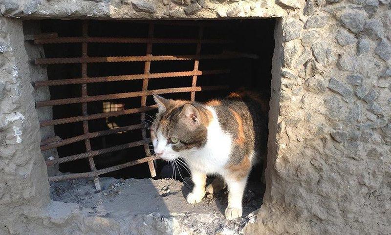Службы ЖКХ обязали оставлять лазейки для кошек в подвалах жилых домов