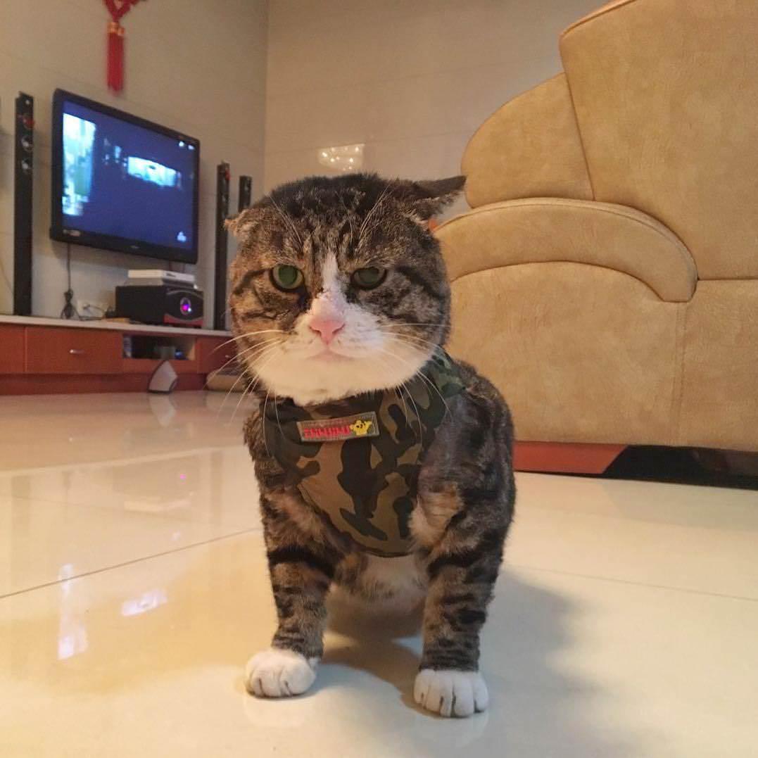 """Найден эмоциональный кот, достойный звания """"король драмы"""""""