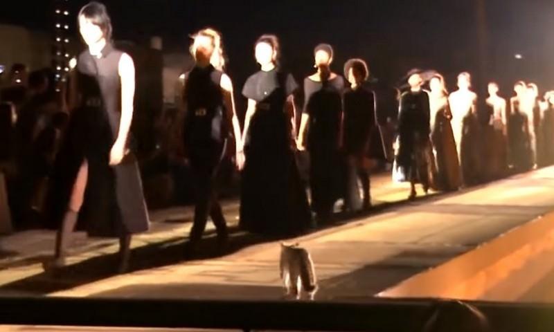 Кот на подиуме пометил новую коллекцию от модного дома Christian Dior