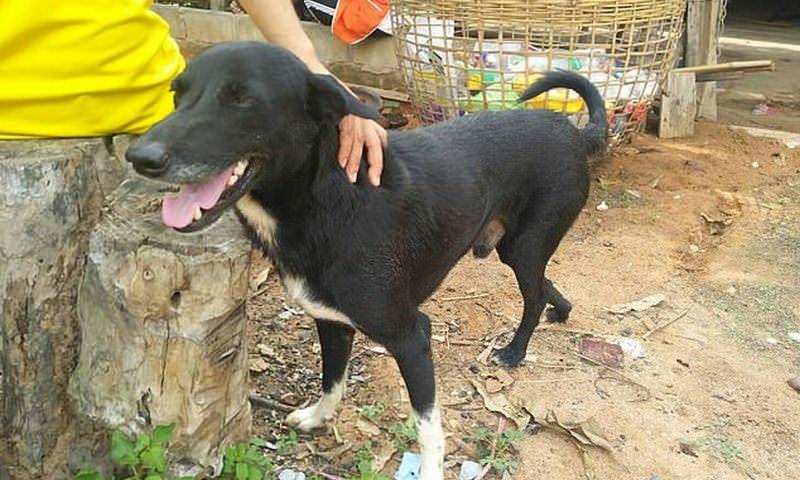 Собака учуяла похороненного заживо младенца и спасла его