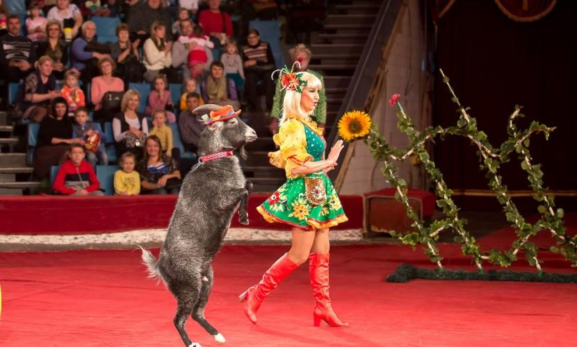 Представители цирка считают, что должны участвовать в лицензировании работы с животными