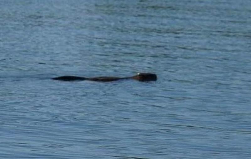 В озере под Благовещенском обнаружили таинственное существо