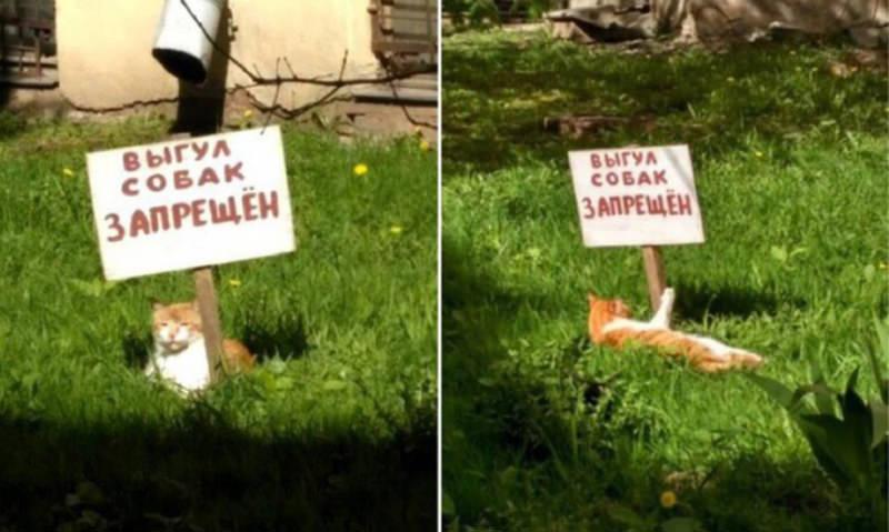 Кот устроил  одиночный пикет