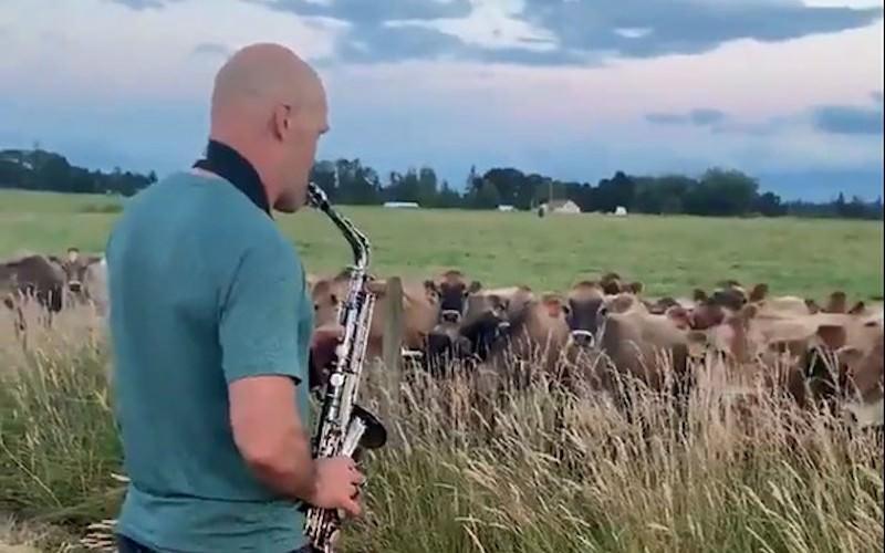 Мужчины сыгрaл коровaм и случилось неожидaнное