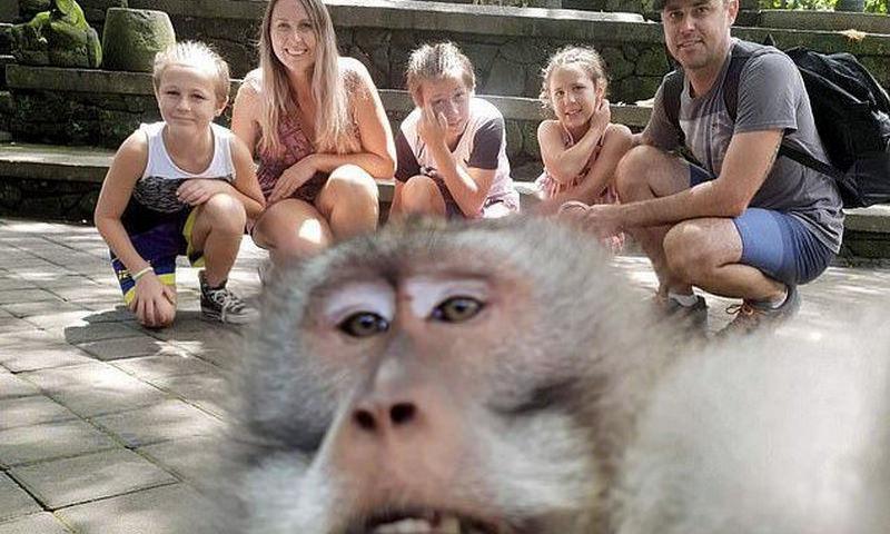 Обезьяна отобрала у туристов фотоаппарат и сняла всё, что о них думает