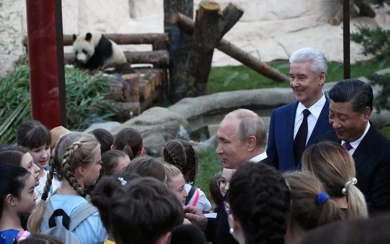 «Девочки по своей природе более выносливые»: Путин о китайском подарке