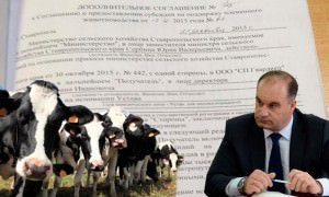 Минсельхоз Ставрополья заподозрили в хищении более 22 млн рублей