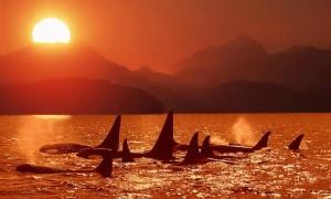 Календарь: 23 июля - Всемирный день китов и дельфинов