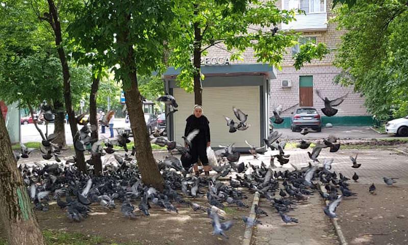 Власти Магадана объявили войну птичьему помету. Лучшие силы города брошены на борьбу с голубями