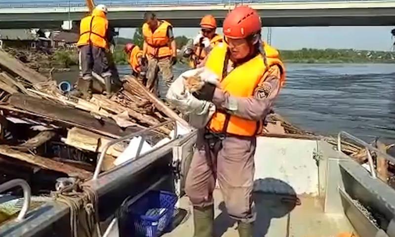 Спасатели вызволяют из водного плена в Тулуне четвероногих пострадавших