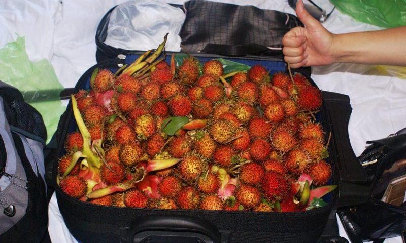 В России ужесточат правила провоза в багаже фруктов, овощей и цветов