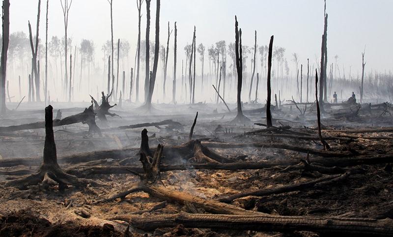 Экологи предсказали исчезновения российского леса через 10 лет