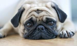 Продукты с сахарозаменителем убивают собак