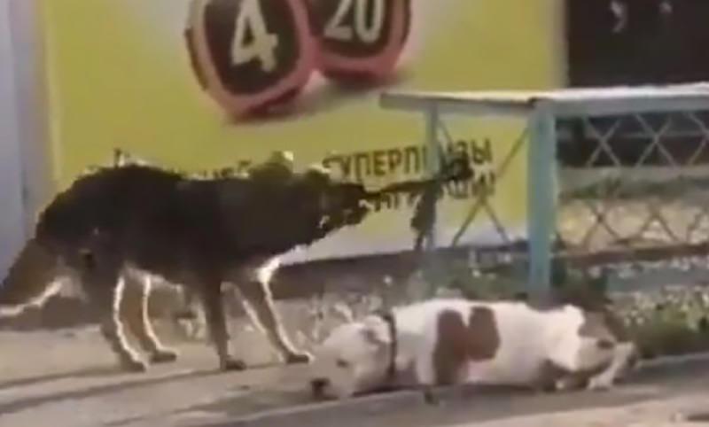 Дворняга отвязала домашнего пса, пока хозяин ходил в магазин