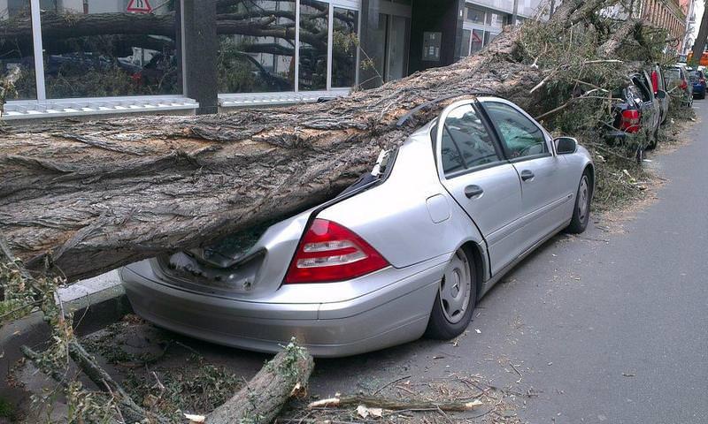 Верховный суд разъяснил, как получить компенсацию за упавшее на машину дерево