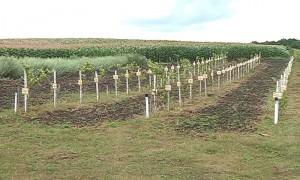 В память об односельчанах, погибших в Великую Отечественную, мужчина посадил яблоневый сад
