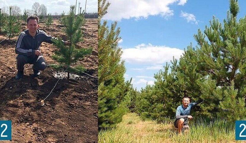 Житель Саратова вырастил сосновый лес на месте свалки