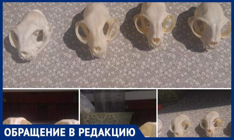 В Новосибирске группа несовершеннолетних годами пытает и убивает домашних животных