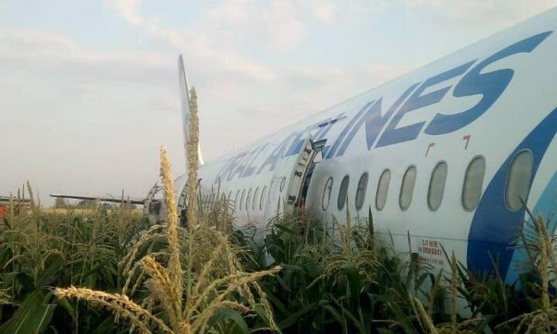 Момент посадки А321 на кукурузное поле в Подмосковье