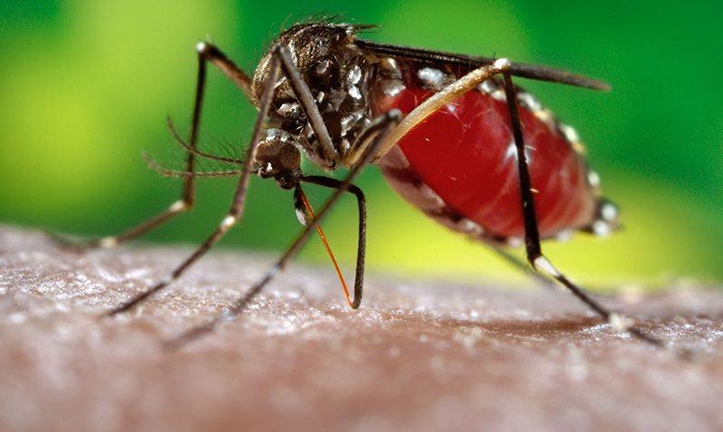 На Россию надвигаются полчища смертельно опасных комаров